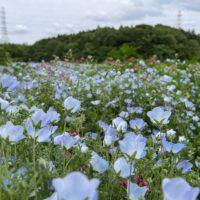 藤沢市の理美容業